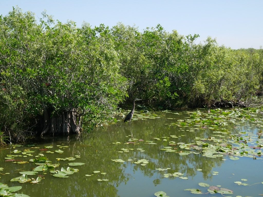 Everglades - Anhinga Trail