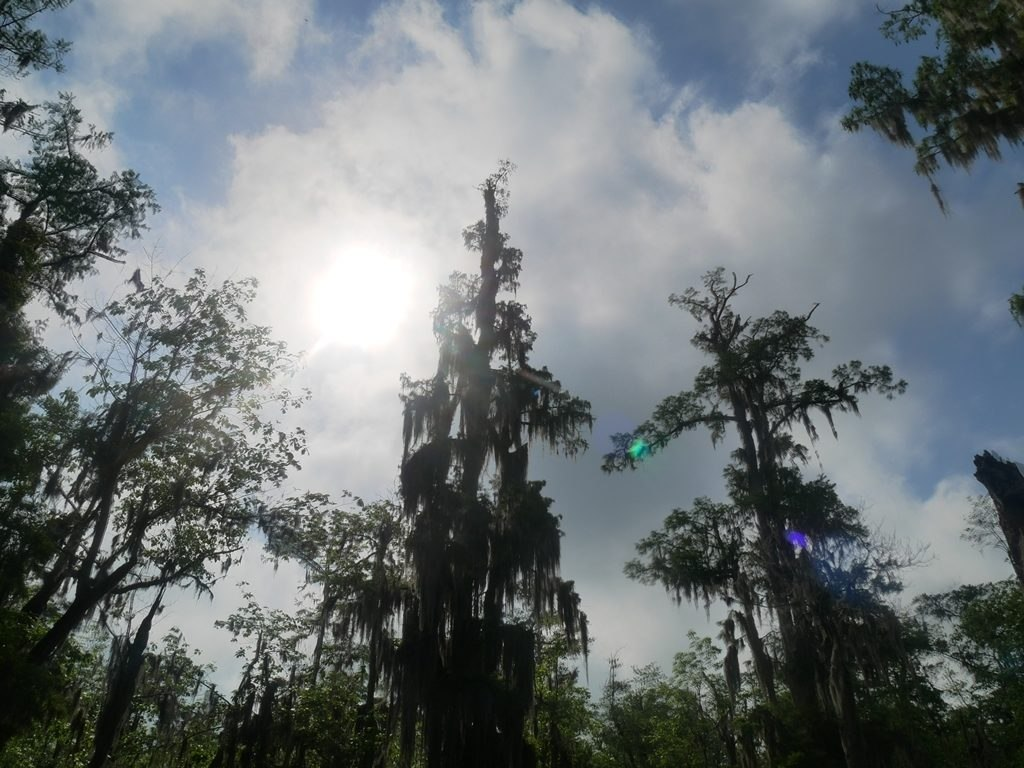 Louisiane - Lac Martin