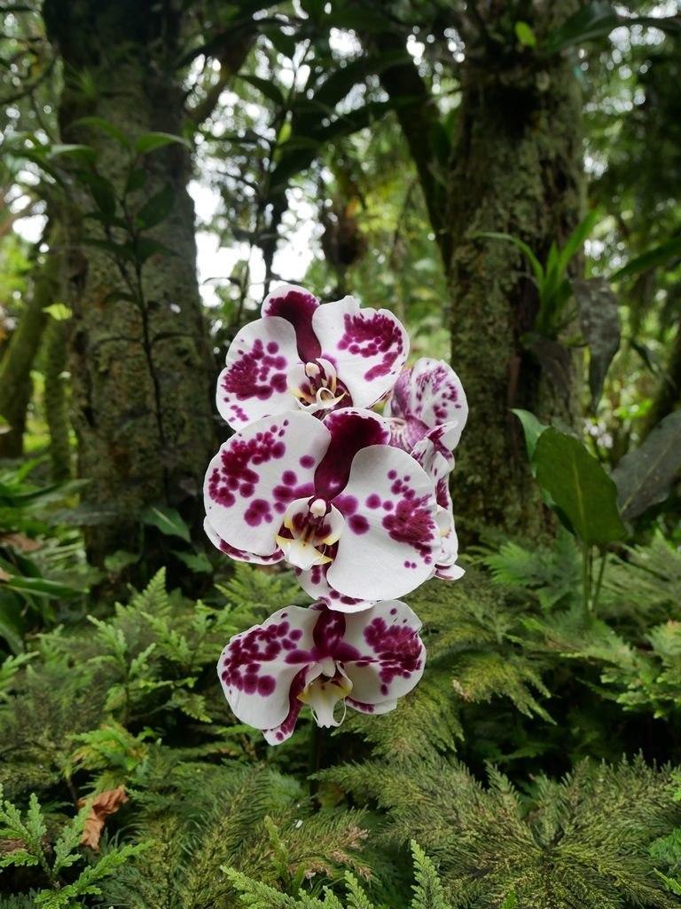 Hawaiian botanical tropical garden - Big Island