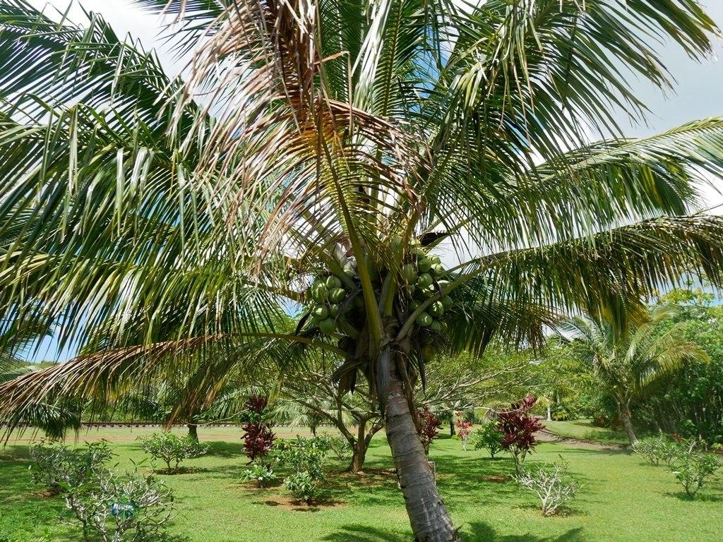 Kilohana Plantation