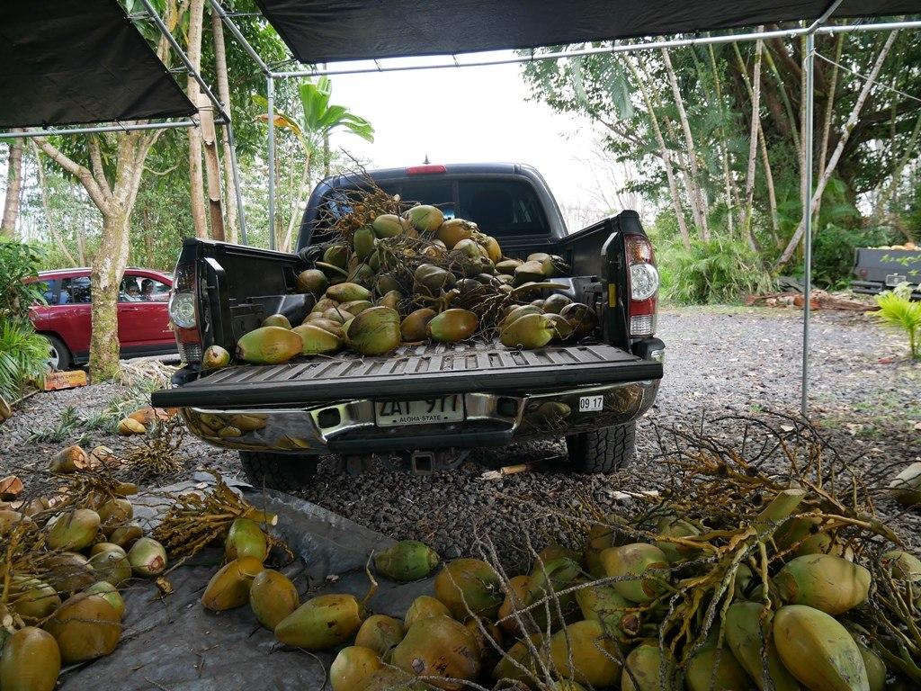 Noix coco sur Big Island