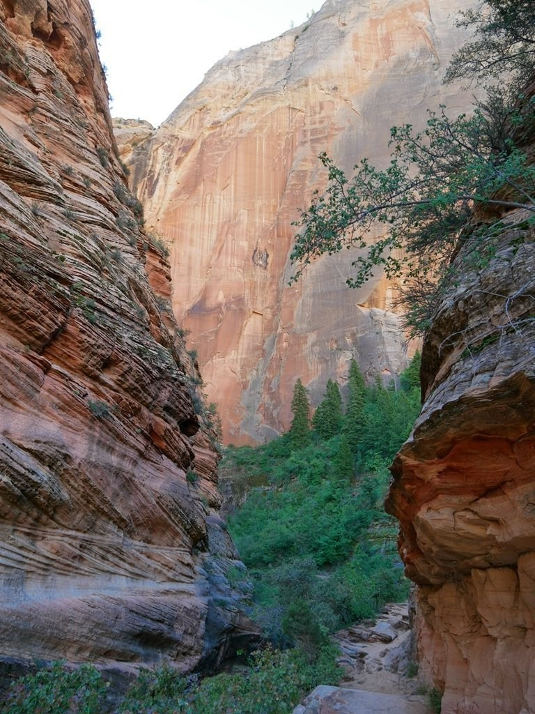 Canyon Observation Point - Zion