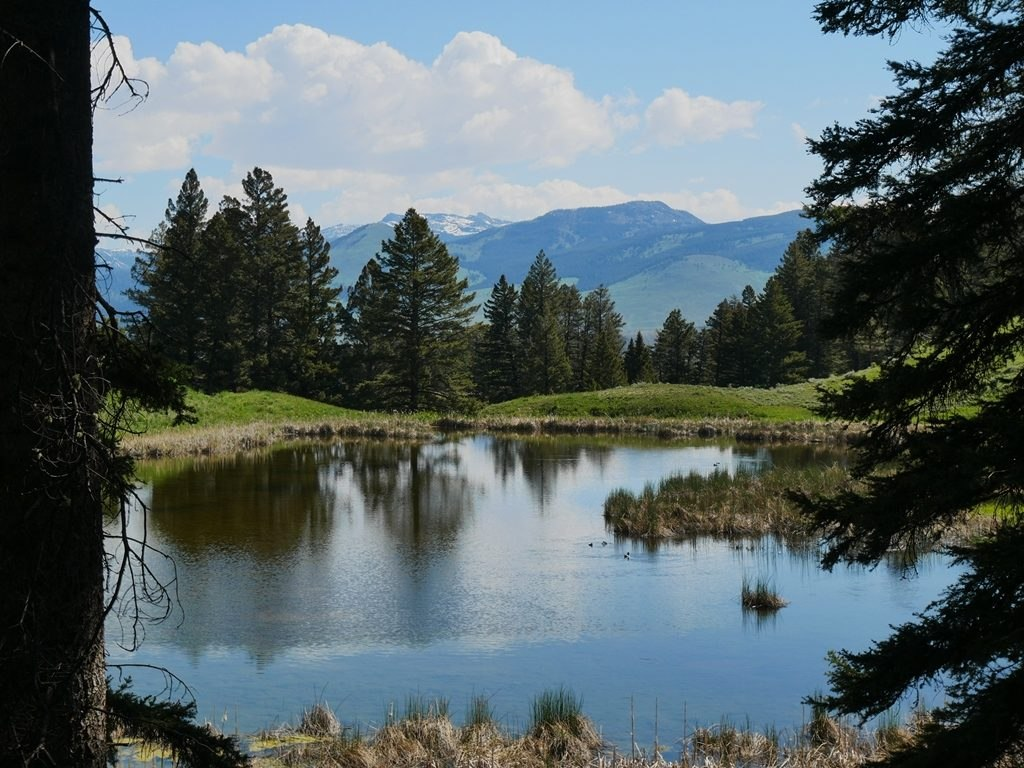Beaver Pond randonnée à Yellowstone