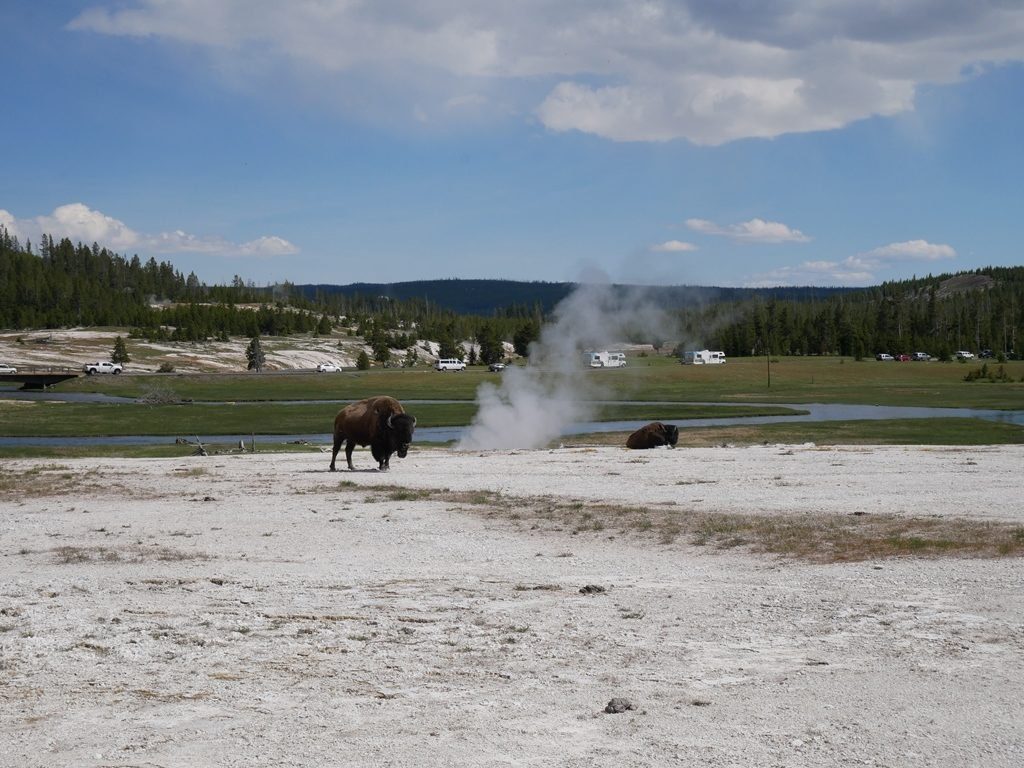 Upper geyser basin fumerolles et bisons à Yellowstone