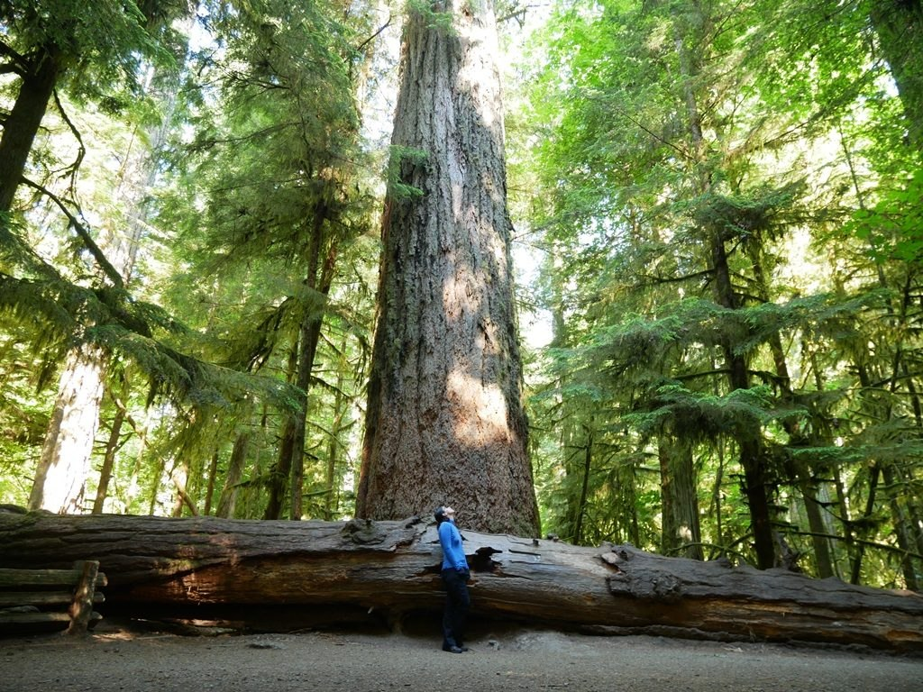 Cathedral Grove - Ile de Vancouver