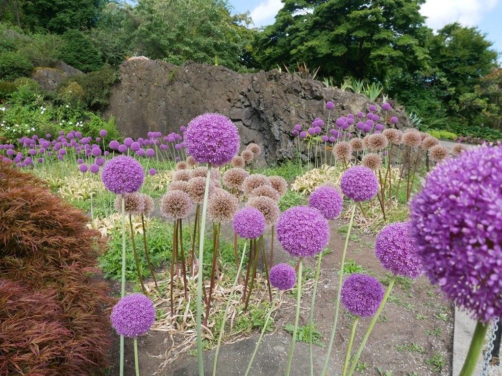 Jardins du parc Queen Elizabeth - Vancouver