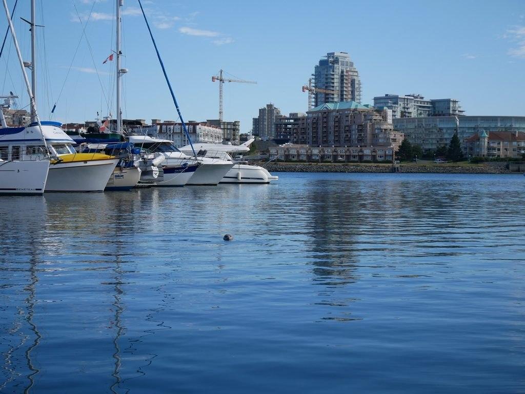Port et otarie - Victoria