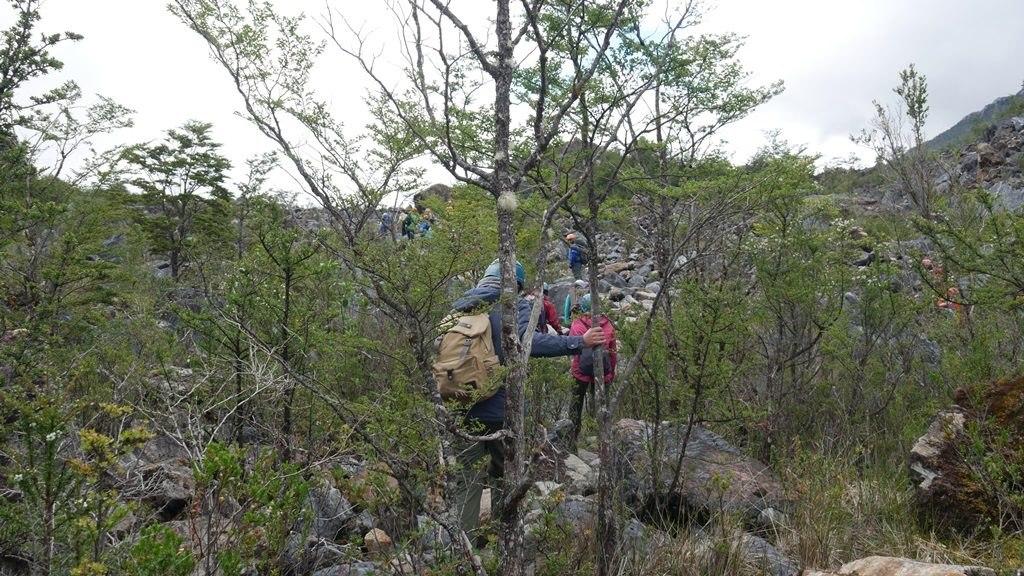 Trekking Exploradores Phase dans la forêt - Carretera Austral