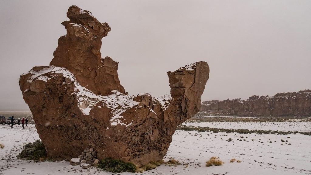 Camelo - Sud Lipez
