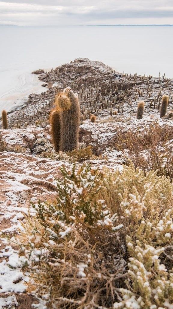 Isla Incahuasi et ses cactus- Sud Lipez