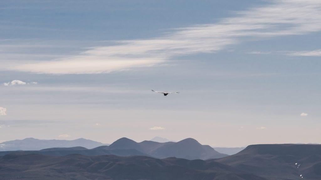 Observations des condors - Sud Lipez