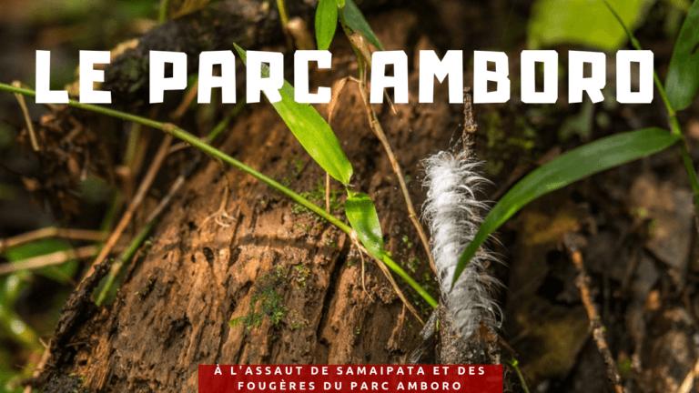 À l'assaut de Samaipata et des fougères du parc Amboro