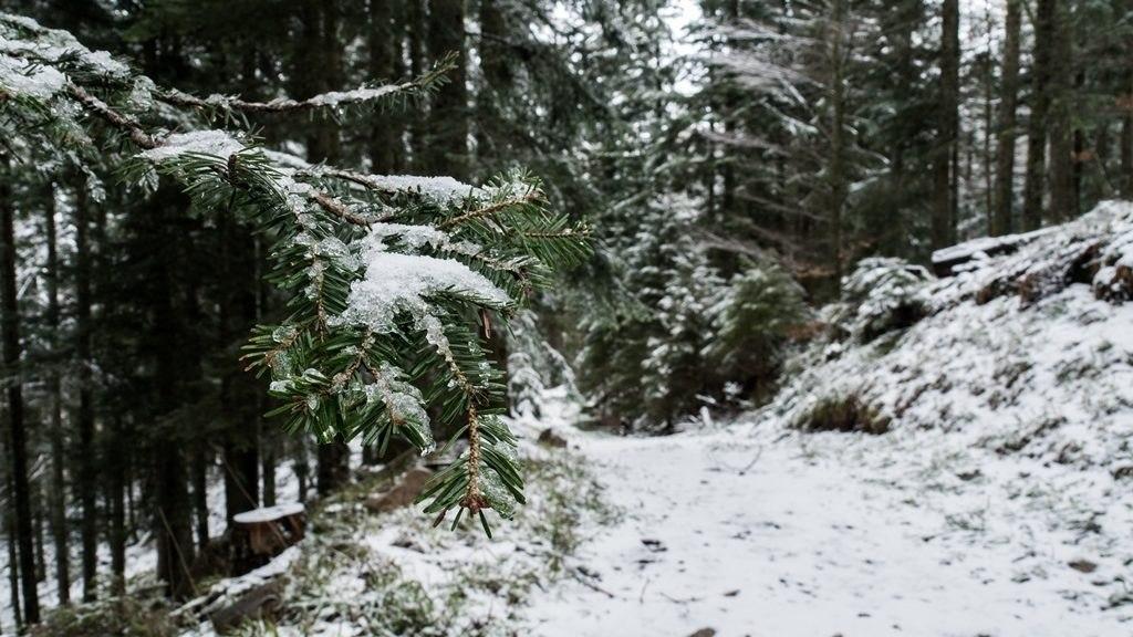 Paysage tete des faux durant l'hiver