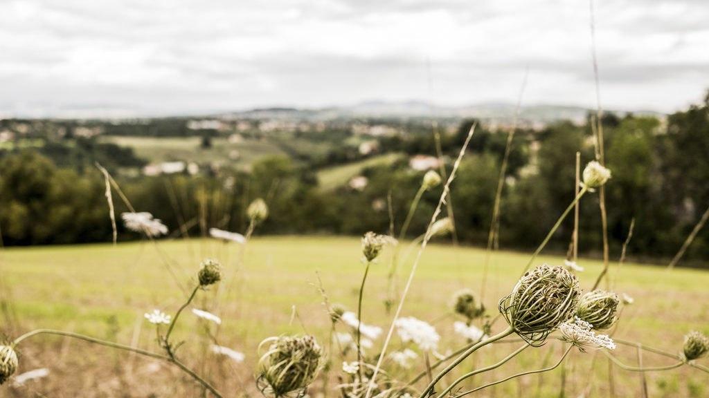 Paysage Jour 1 randonnée dans les monts du lyonnais